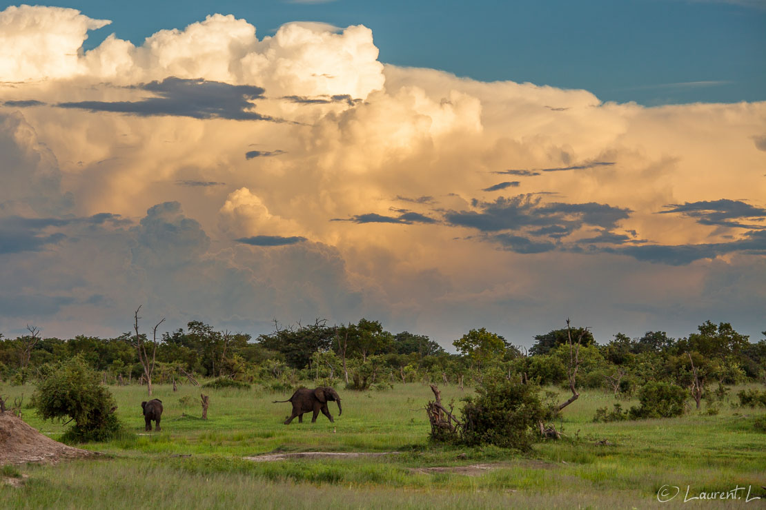 "Elephant solitaire (Hwange National Park)  |  1/400 s à f/8,0 - 200 ISO - 135 mm  |  31/12/2010 - 18:17  |  18°41'26"" S 26°57'27"" E  |  1057 m"