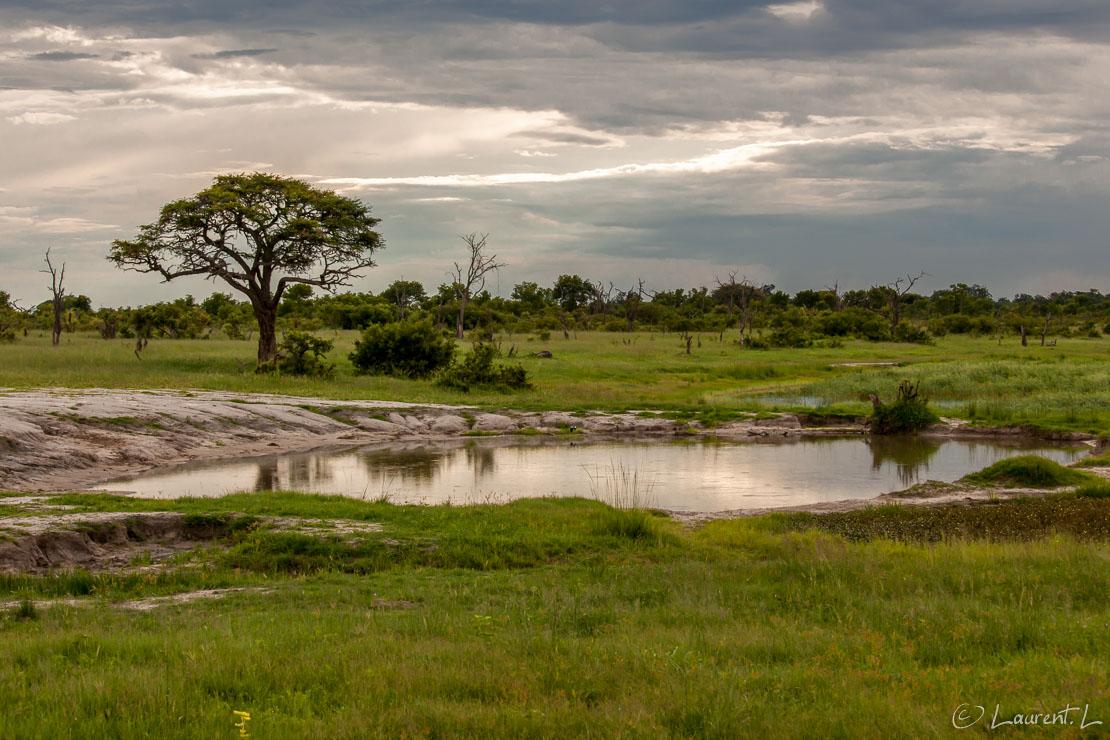 "Elephant waterhole (Hwange National Park)     1/800 s à f/9,0 - 800 ISO - 70 mm     02/01/2011 - 17:47     18°41'26"" S 26°57'26"" E     1057 m"