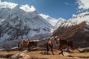 131101_Trek_Manaslu_Etape_Samdo_Dharamsala_005.jpg