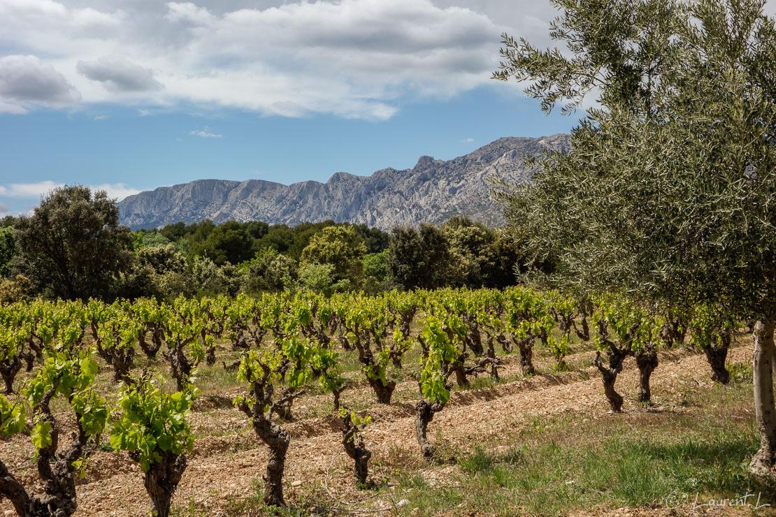 Etape 8 : Saint Maximin / Longuette ↔ Puyloubier (26,4 kms)  |  01/05/2014 - 14:45  |  Au loin, j'aperçois la montagne Sainte Victoire. Je mesure en cette huitième étape tout le chemin parcouru depuis Antibes. Plus je m'approche de ce fascinant promontoire calcaire, plus je le photographie. A son pied, je traverse la fameuse résidence des légionnaires invalides avant d'arriver à Puyloubier. Je suis déjà dans les Bouches-du-Rhône.