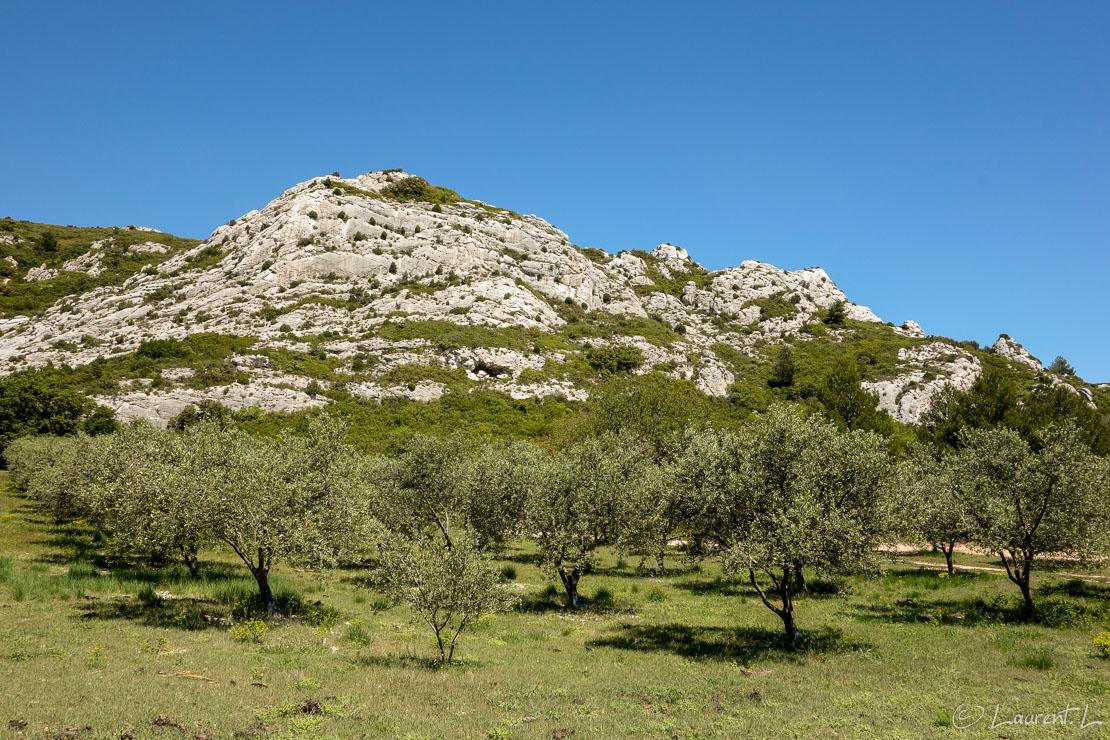 04/05/2014 - 14:16  |  Etape 11 : Salon-de-Provence / Les Viougues ↔ Maussane-les-Alpilles (34,3 kms)  |  J'atteinds le versant sud des Alpilles, petit massif calcaire dominant la plaine de la Crau. Les paysages sont très reposants avec des garrigues parsemées de champs d'oliviers. Le Mistral souffle encore en rafales donnant au ciel une belle clarté. Le matin, je domine toute la plaine de la Crau et aperçois au loin le complexe industriel de Fos-sur-Mer... J'entends aussi des avions légers qui, vers Salon, s'entrainent sur des acrobaties.
