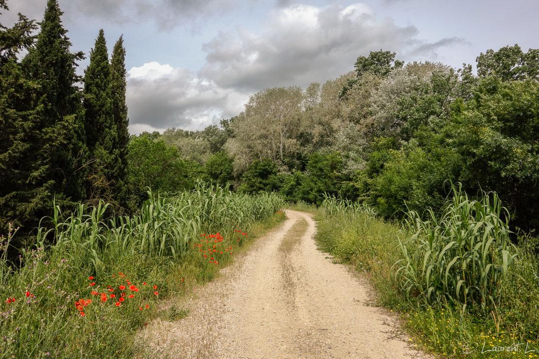 06/05/2014 - 12:08  |  Etape 13 : Arles nord ↔ Saint Gilles (25,7 kms)  |  Je décide d'emprunter une variante de la route d'Arles vers Saint Jacques-de-Compostelle (distant de 1550 kms) : mes hôtes de la veille m'ont conseillé la digue du Petit Rhône plutôt que la route classique (GR653), sur bitume à cet endroit. Je marche donc sur cette digue sur plus de 15 kms et pas de doute, je suis bien en Camargue, les moustiques sont au rendez-vous. Le soir à Saint Gilles, je rencontre pour la première fois depuis mon départ d'Antibes quelques pélerins dans ce sympathique gîte. J'en rencontrerai désormais tous les jours : le chemin d'Arles est la deuxième route la plus empruntée après celle du Puy.