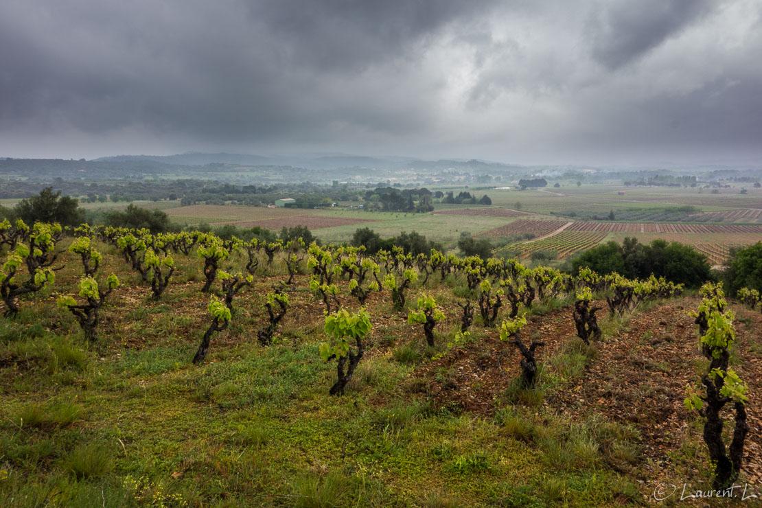 Etape 18 : Montarnaud est ↔ Saint Guilhem-le-Désert (21,2 kms)  |  26/04/2015 - 13:14  |  Les prévisions météo sont pessimistes sans être alarmistes pour mes premières étapes de l'année 2015. Aussi, je décide de ne pas forcer le kilométrage de mes premières journées. La traversée des montagnes du Haut Languedoc me permettra de monter en puissance le moment venu. En attendant, je parcours le piémont héraultais vers Saint Guilhem-le-Désert bien protégé des intempéries. En Chemin, je croise d'autres pélerins avec lesquels des échanges se nouent facilement. Ces rencontres sont conviviales et motivantes.