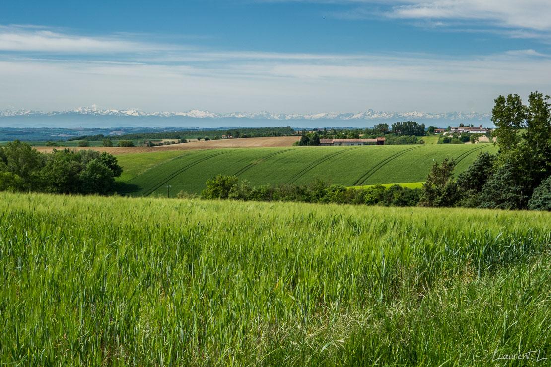 07/05/2015 - 11:26  |  Etape 29 : Les Cassés ↔ Baziège (24,1 kms)  |  Au départ de mon gîte le matin, mon hôte m'indique, ainsi qu'aux autres pèlerins de passage, qu'une alternative au Chemin d'Arles est possible nous faisant gagner pas moins d'une journée de marche : au lieu de poursuivre la Rigole vers le col de Naurouze au sud, je choisis cette variante des collines du Lauragais, plus directe, qui doit m'emmener à Bazièges en une journée au lieu de deux. Le matin, celle-ci m'offre une vue saisissante sur les Pyrénées au loin. Le parcours relativement plat est ponctué de petites côtes à gravir avec quelques villages ici et là.